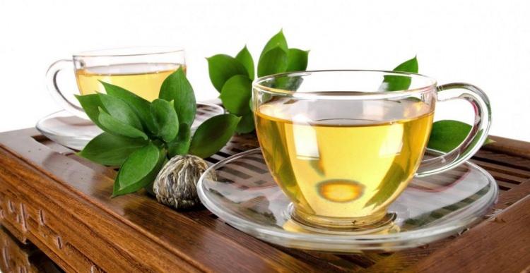beyaz-çay-yetiştiriciliği
