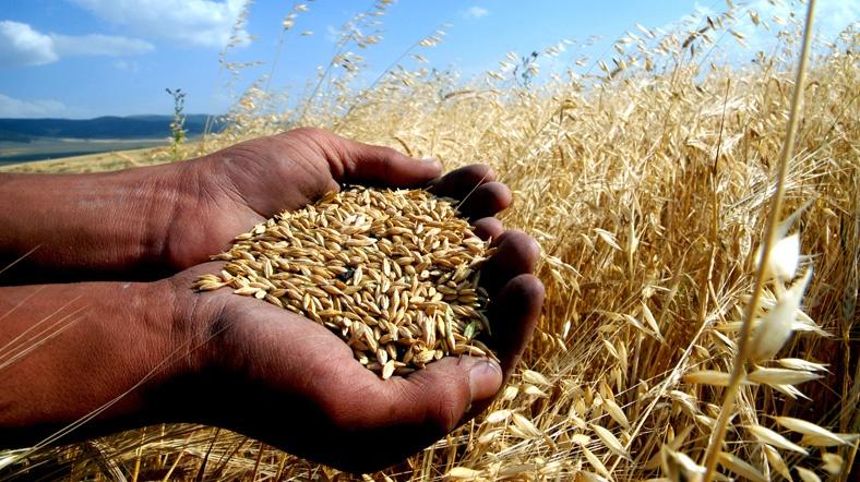 mısır-buğda-ve-pamuk-ticareti-ile-kazanç