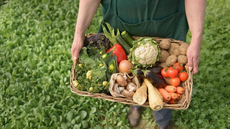organik tarım yaparak evde para kazanma
