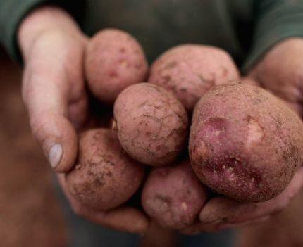 başarı hikayeleri patates satarak milyoner oldu